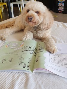 Max the Cavapoo puppy sitting on a mat with his paws resting on a book